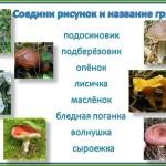 узнай гриб