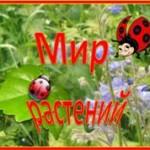 растения мини