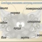 синонимы1