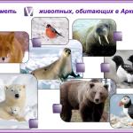 КАРТОЧКА №3. Арктика