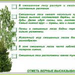 КАРТОЧКА №4. Лес